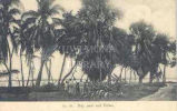 May pole and Palms